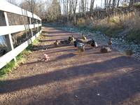 Bear and ducks waiting 3