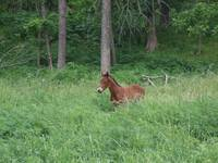 New Foal in Forest