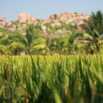 """India Hampi Rice fields and red rocks"" by royporat"