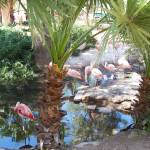 """FLAMINGO POND"" by claudemarshall"