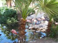 FLAMINGO POND