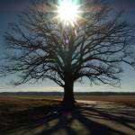 """""""Burr Oak 1.14.2006"""" by notleyhawkins"""