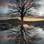 """McBaine Missouri: Burr Oak 12.1.2008"" by notleyhawkins"