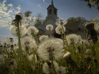 Dandelion Church 4.22.2006