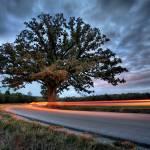 """""""Burr Oak 10.21.2007"""" by notleyhawkins"""