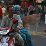 """People - Indian Market Life"" by royporat"