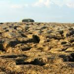 """""""Burren doolin Rocky Landscape panoramic"""" by royporat"""