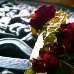 """""""Roses at Cimetière du Père-Lachaise"""" by rachelro"""