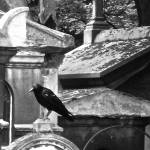 """Crow Perched at Cimetière du Père-Lachaise;"" by rachelro"