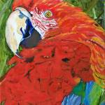 """""""Puffy Parrot"""" by lmeaux2"""
