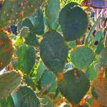 """Cactus Spider Web"" by TomZimmer"