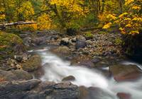 Autumn Downstream