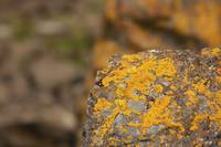Abstract Rock Yellow stains