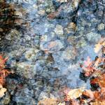 """Leaves in water"" by Norm"