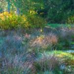 """""""Wetland Morning"""" by LydiaGaebeBishop"""