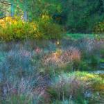 """""""Wetland Morning Watercolor"""" by LydiaGaebeBishop"""