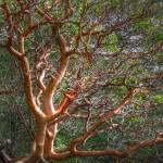 """""""Wide Branches"""" by LydiaGaebeBishop"""