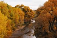 river with autumn trees