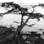 """""""Washington Park Tree"""" by LydiaGaebeBishop"""