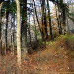 """""""Trees on hillside 2"""" by Norm"""