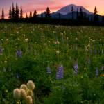 """""""Alpine Garden"""" by Dawsonimages"""