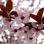 """Pink"" by Silvina"