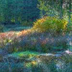 """Misty Wetland Morning 1"" by LydiaGaebeBishop"