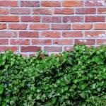 """Brick Art"" by aicramphoto"
