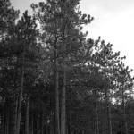 """""""pine ridge"""" by fjsjr"""