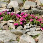 """Flower Rock"" by aicramphoto"