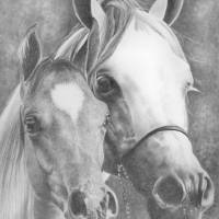 mother and foal Art Prints & Posters by Karen Townsend