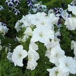 """""""Bright Flowers"""" by aksonova"""