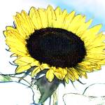 """Sunflower I"" by Cindisart"