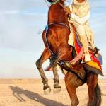 """Knight From Libya"" by LibyaPhotographer"