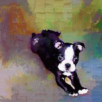 Picture Perfect Pup Art Prints & Posters by Patti Meador