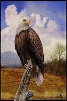 bald eagle with grand vista