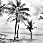 """Palms in Silver II"" by Cynthia_Burkhardt"