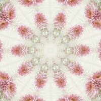 Pink Chrysanthemums Kaleidoscope Art 2