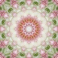 Pink Chrysanthemums Kaleidoscope Art 3