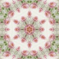 Pink Chrysanthemums Kaleidoscope Art 4