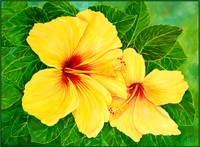 Yellow Hibiscus Hawaii