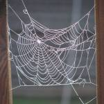 """Spider Web"" by Whittier"