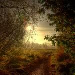 """""""Autumn Mist"""" by irishphotographer"""