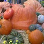"""Pumpkins in the Fall"" by memoriesoflove"