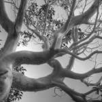 """""""Heavy Branches"""" by LydiaGaebeBishop"""