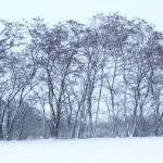 """snowtrees"" by Winston"