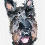 """Scottish terrier"" by piker77"