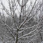 """""""Snowy branches"""" by flashesofnature"""