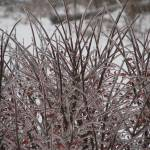 """""""Icy branches 2"""" by flashesofnature"""