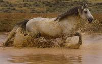 Running Through The Waterhole